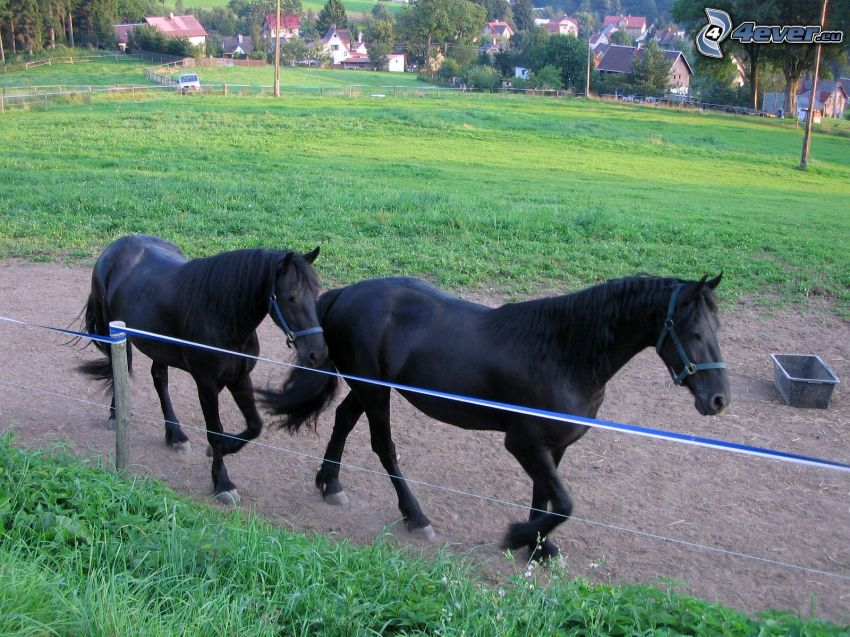caballos negros, valla