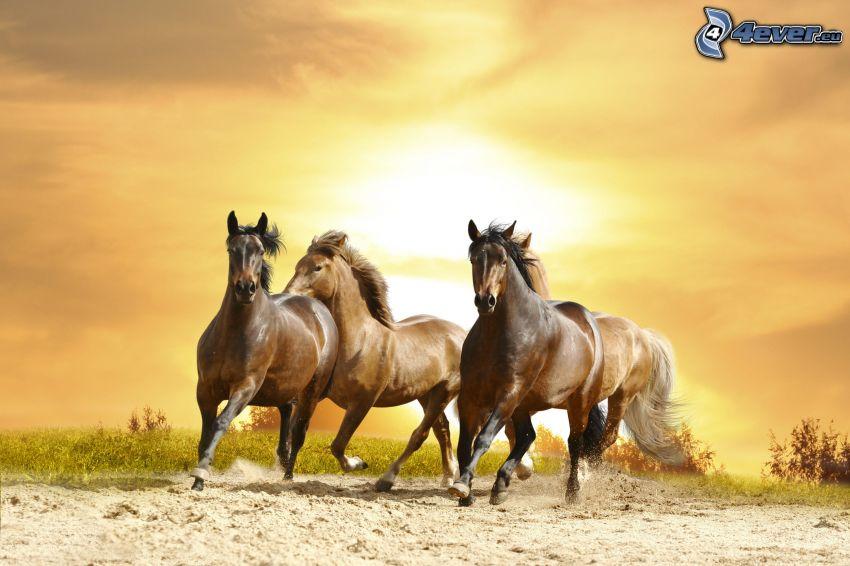 los caballos marrónes