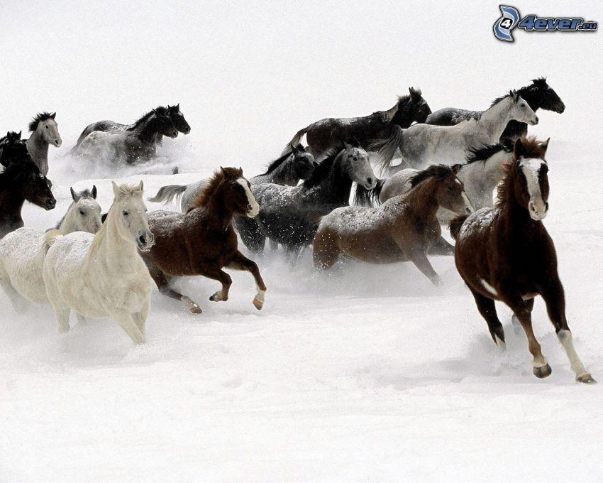 manada de caballos, carrera, nieve, invierno