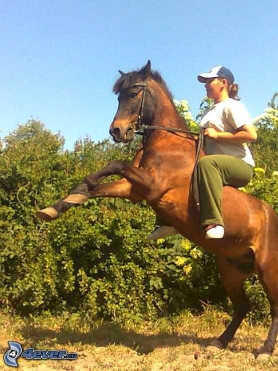 poni, caballo, jinete