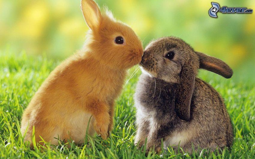 conejitos, beso