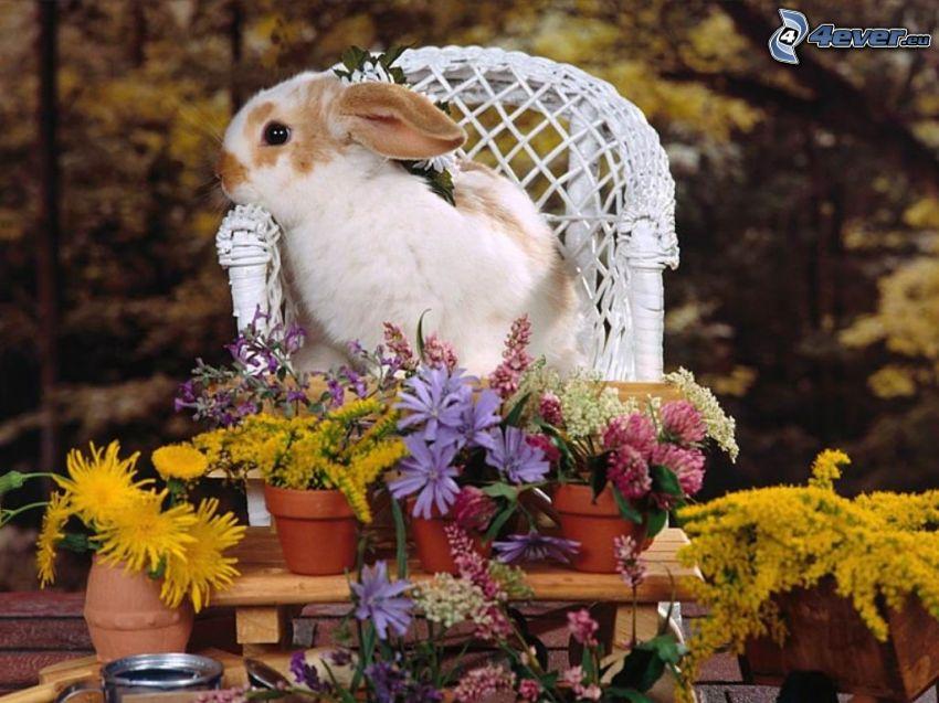 conejo, flores