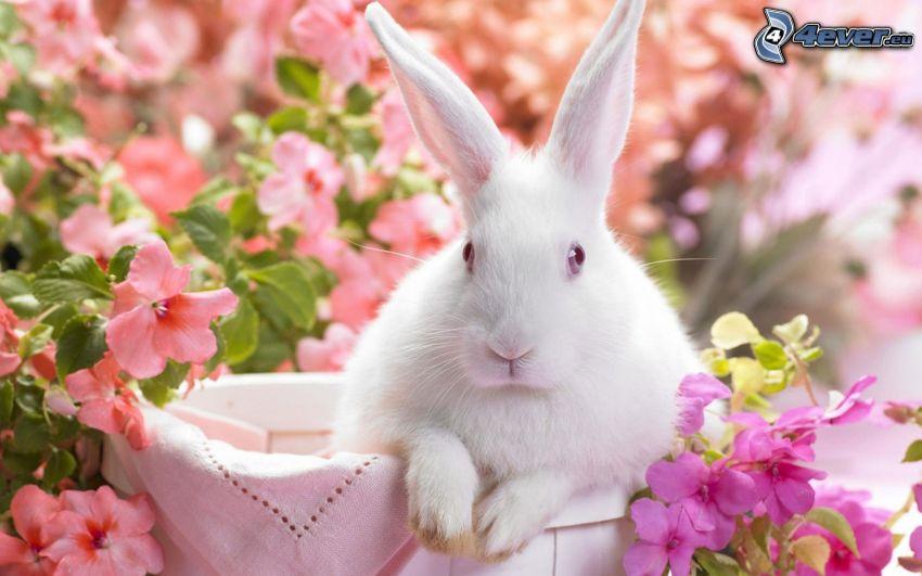 conejo, flores de color rosa