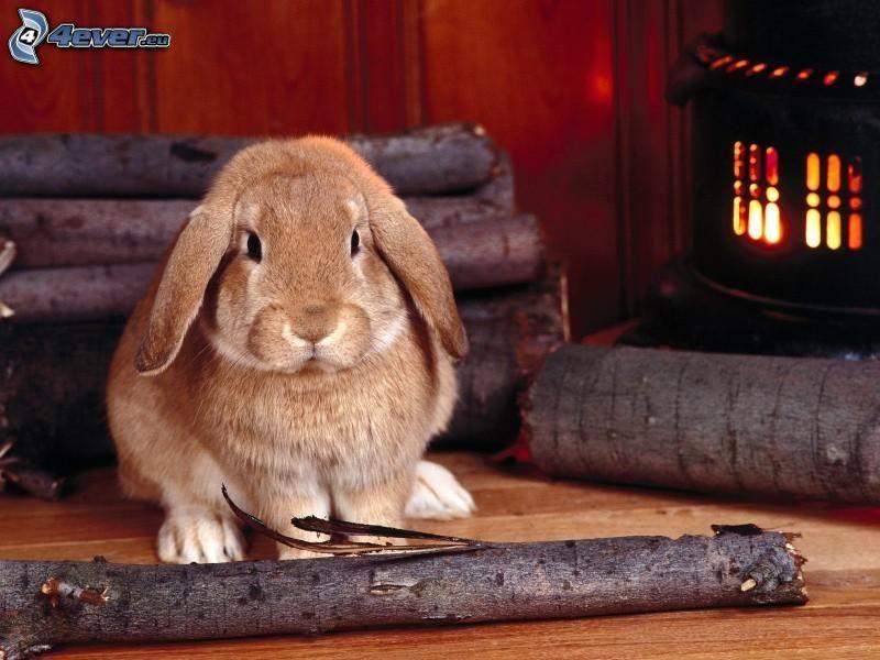 conejo, madera, fuego