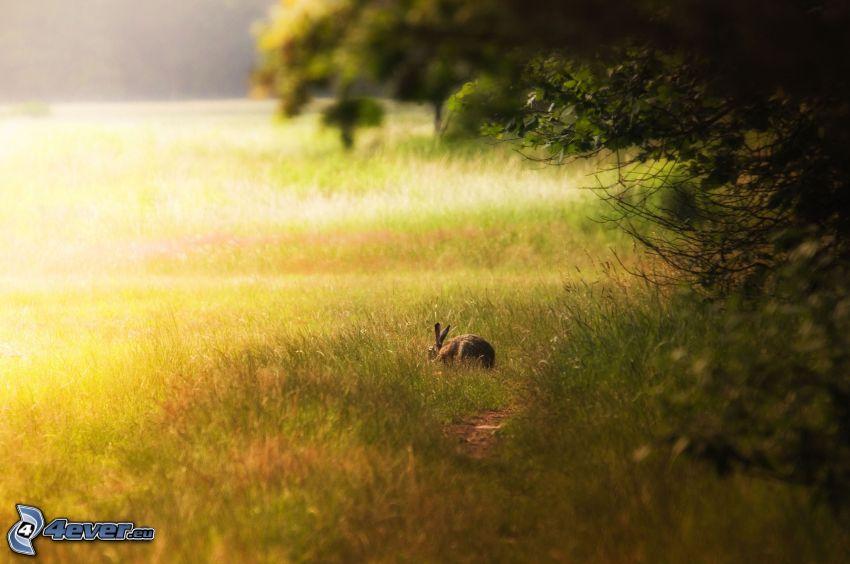 conejo, prado, hierba, árboles