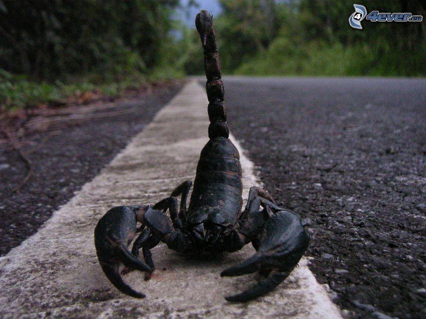 escorpión, camino