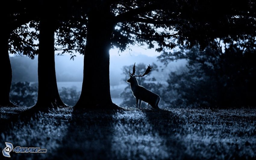 gamo, siluetas de los árboles, noche