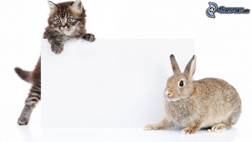 gato marrón, conejo