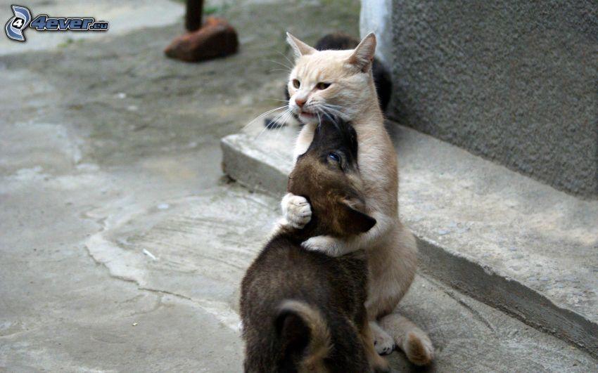 gato y perro, abrazar