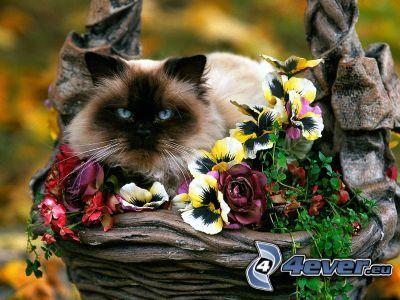 el gato pérsico, flores, gatito en una cesta
