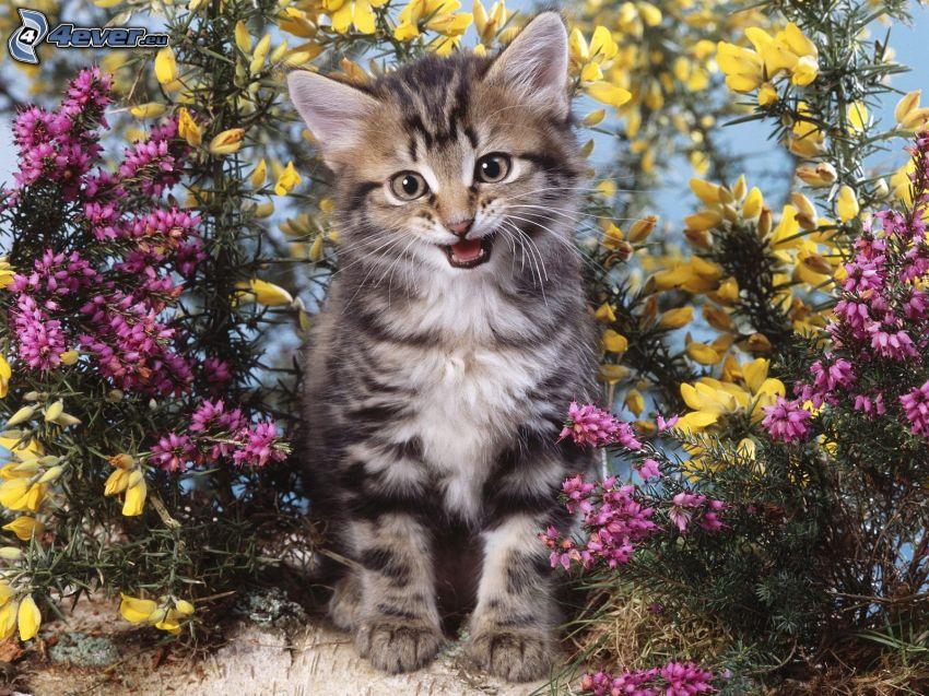gatito, flores