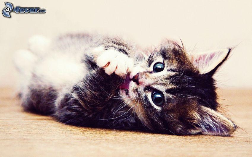 gatito, oración