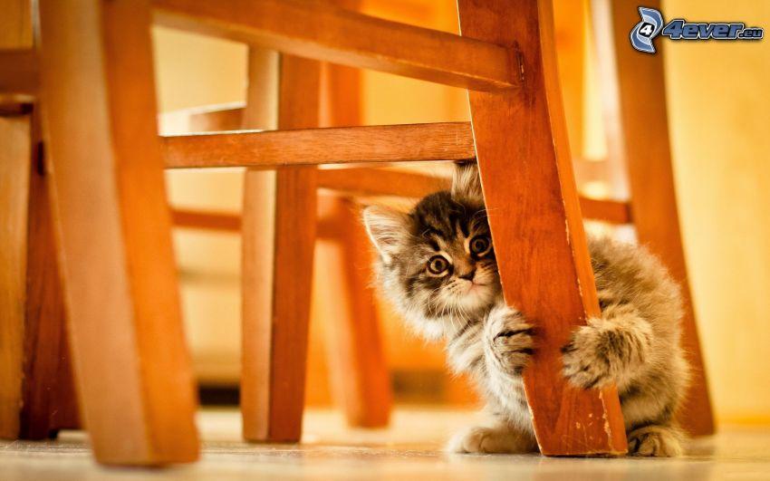 gatito, silla, miedo