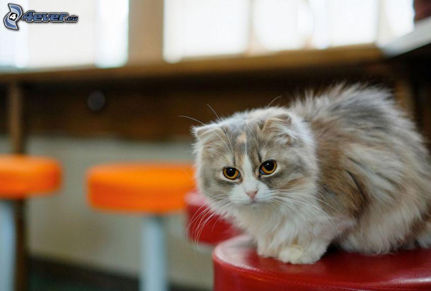 gatito, taburetes de bar