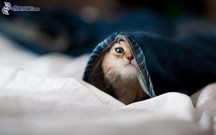 gatito, vaqueros