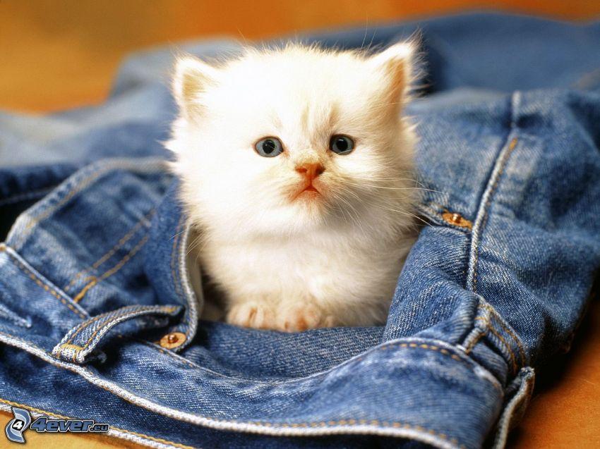 gatito blanco, vaqueros