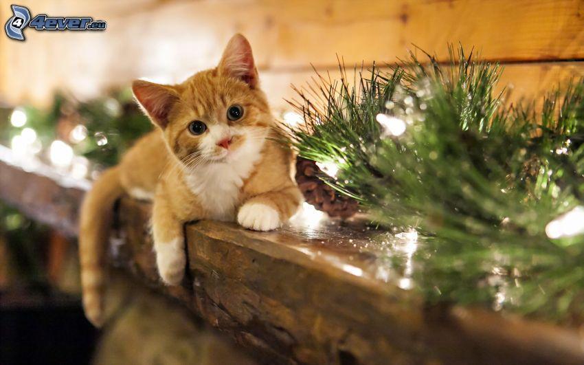 gatito color herrín