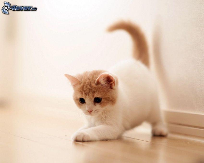 gatito con ganas de jugar