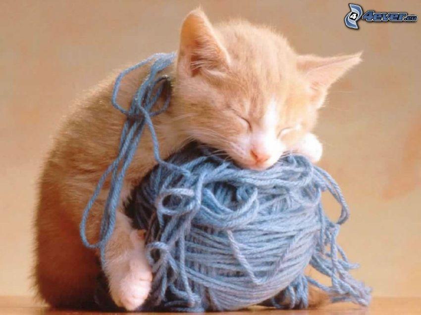 gatito durmiendo, bola, lana
