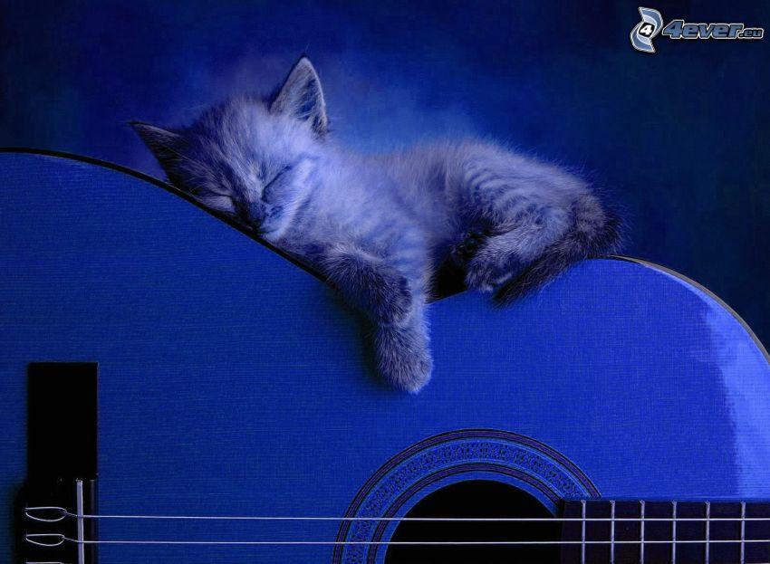 gatito durmiendo, guitarra