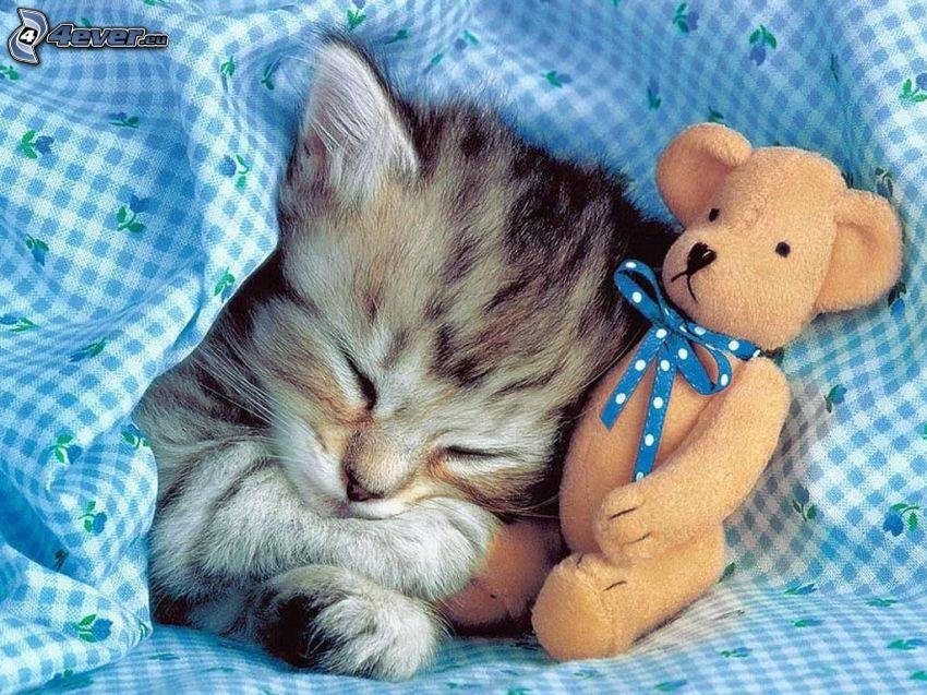 gatito durmiendo, oso de peluche