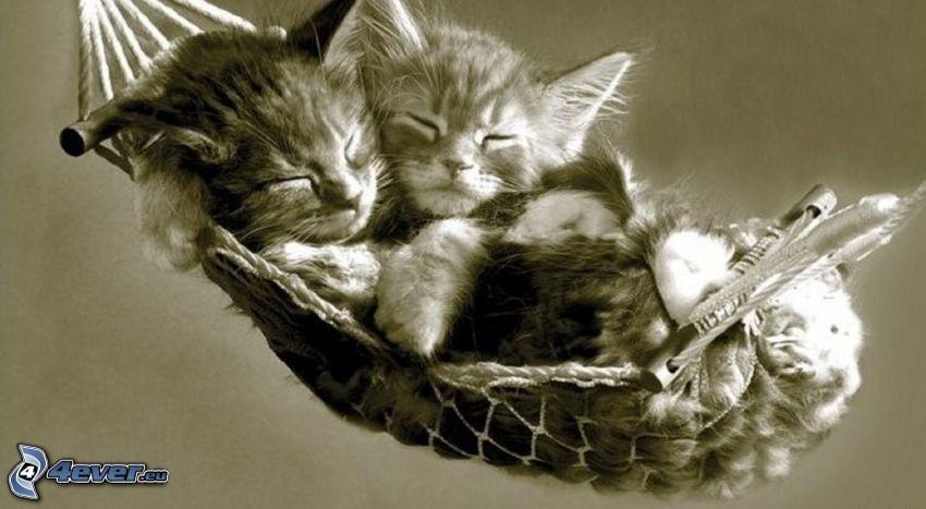 gatito durmiendo, tumbarse en una red