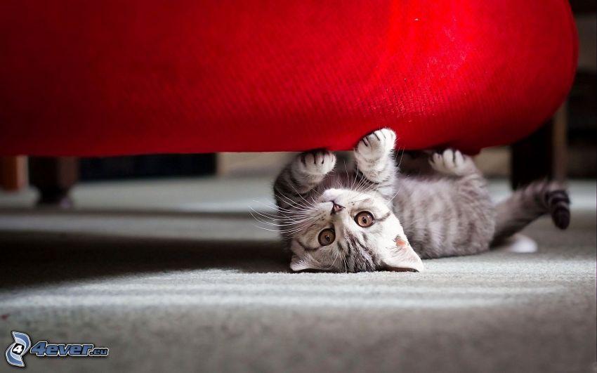 gatito en la espalda, asiento
