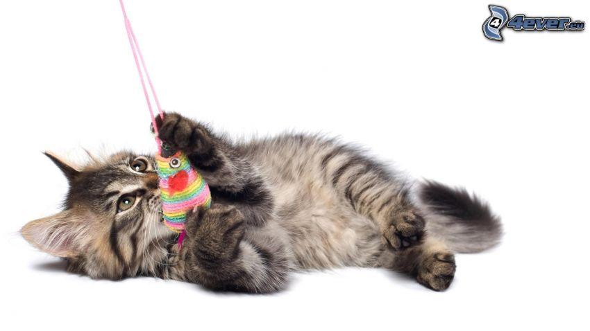 gatito en la espalda, juguete