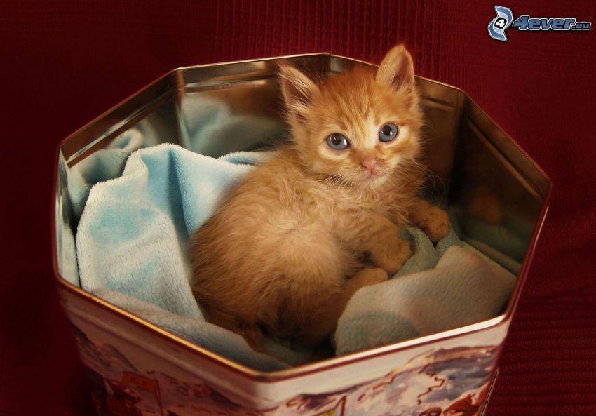 gatito en una caja, pequeño gato pelirrojo