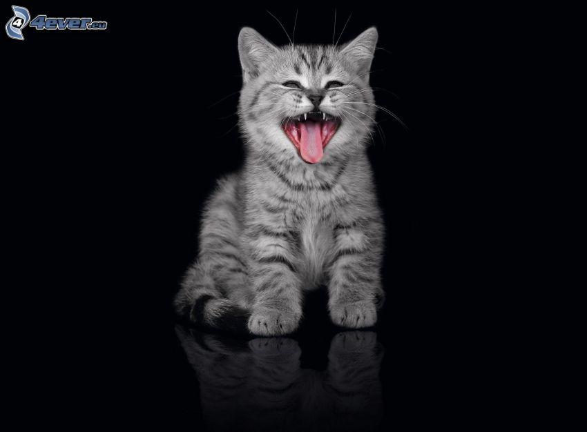 gatito gris, lengua