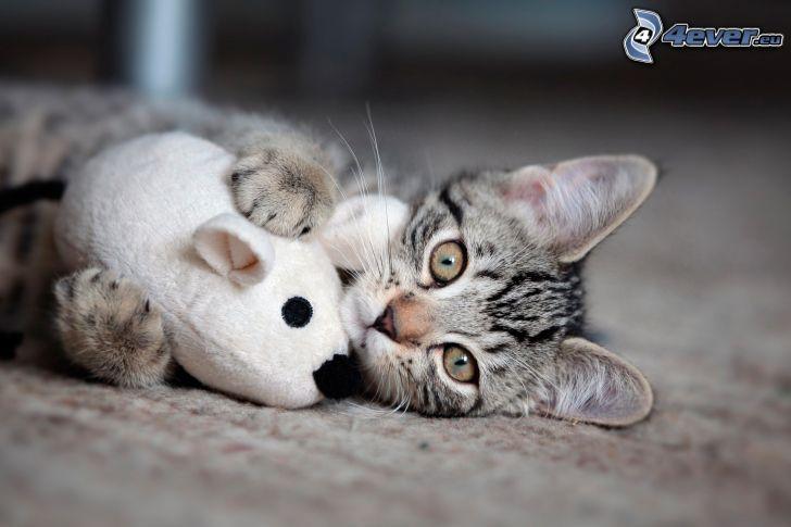 gatito gris, peluche, ratón