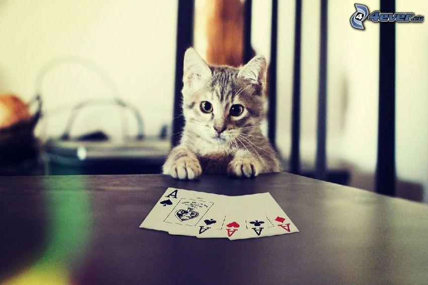 gatito gris, tarjetas, Aces