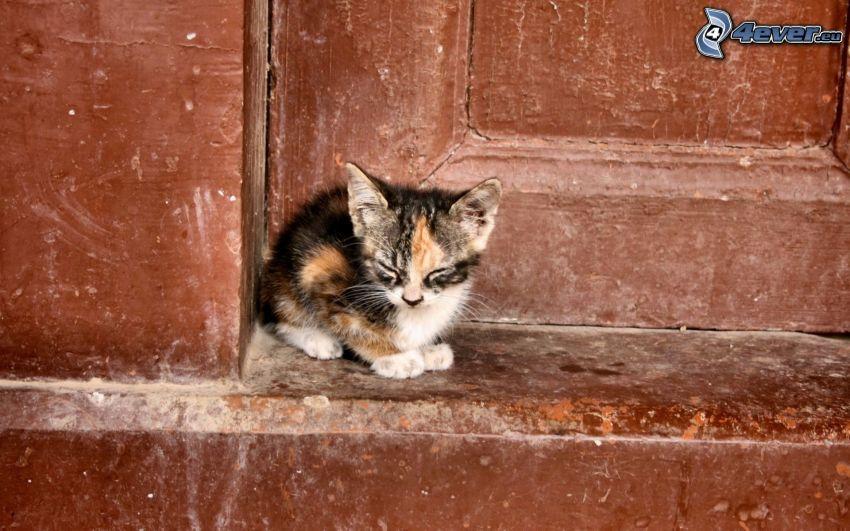 gatito manchado, puerta