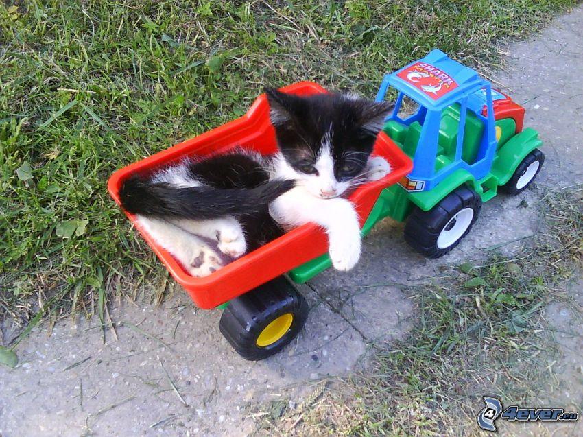 gatito manchado, tractor, juguete