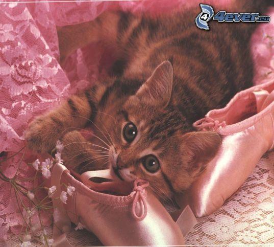 gatito pequeño, bailarinas
