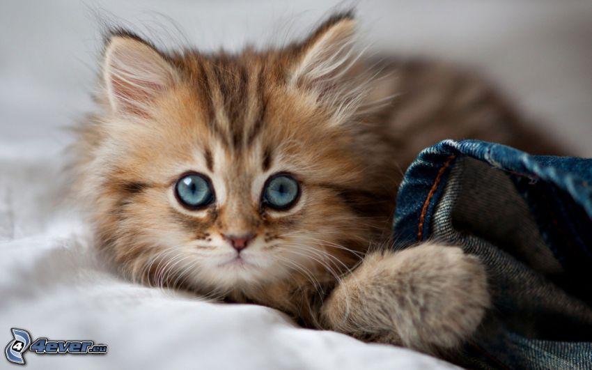 gatito pequeño, gato de pelo pelirrojo