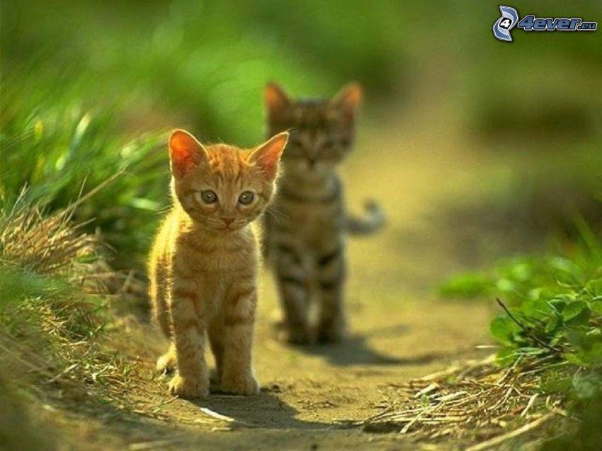 gatitos, gatito en el prado