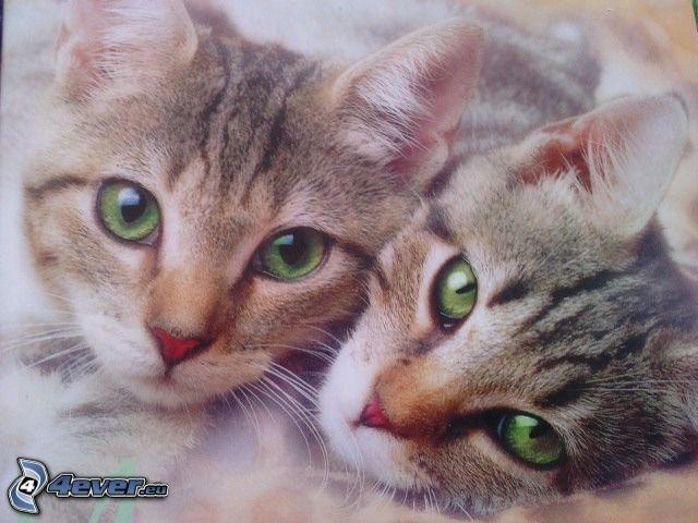 gatitos, ojos verdes