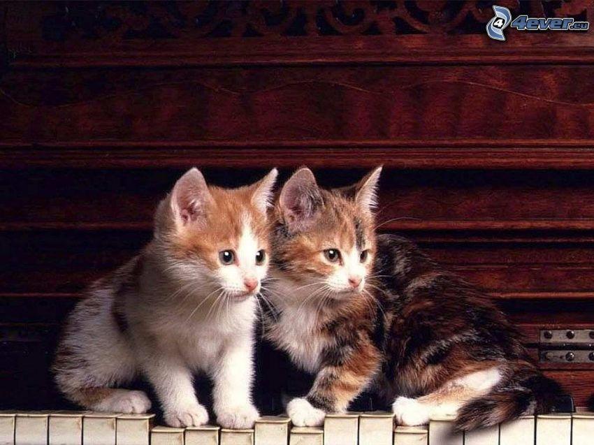gatitos, piano viejo