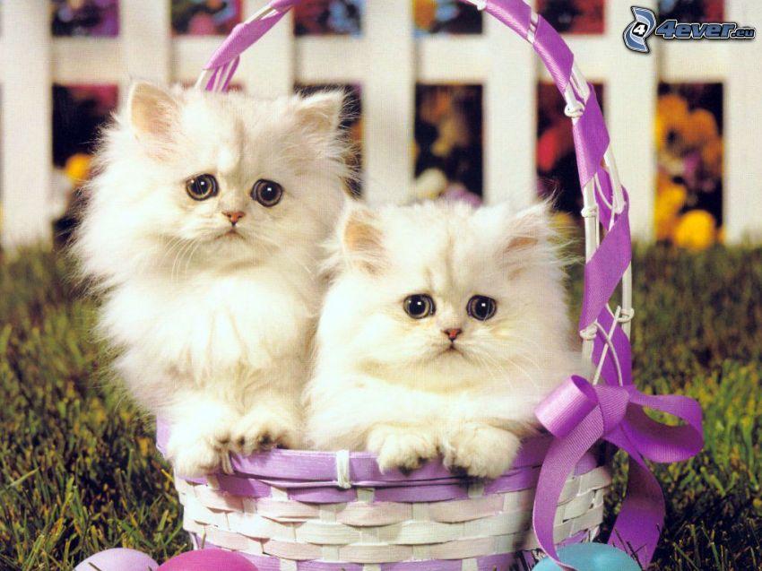 gatitos en una cesta, cinta, cerco de madera