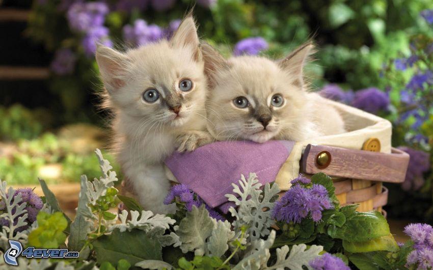 gatitos en una cesta, flores