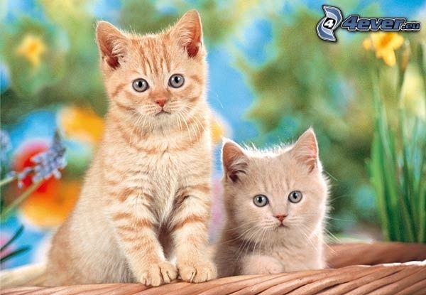 gatitos en una cesta, gato de pelo pelirrojo, flores