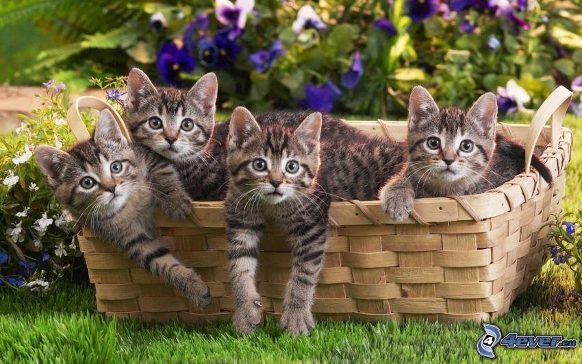 gatitos en una cesta