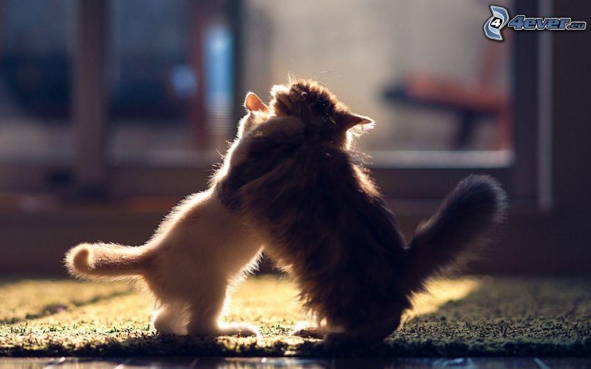 gatitos jugando, abrazar