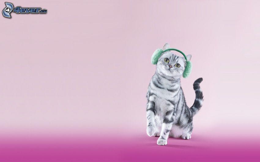 gato, auriculares