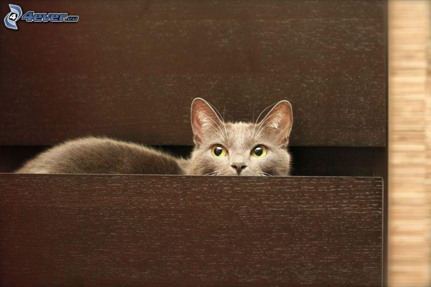 gato, cajón