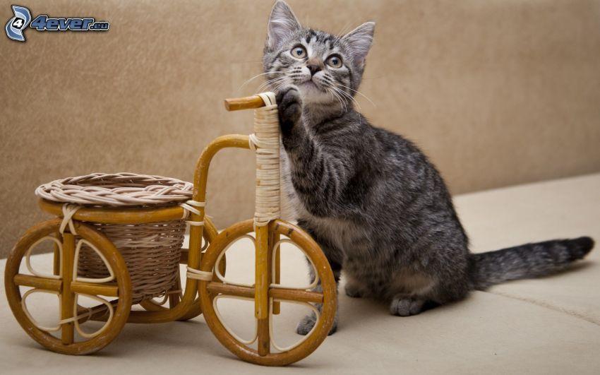 gato, decoración