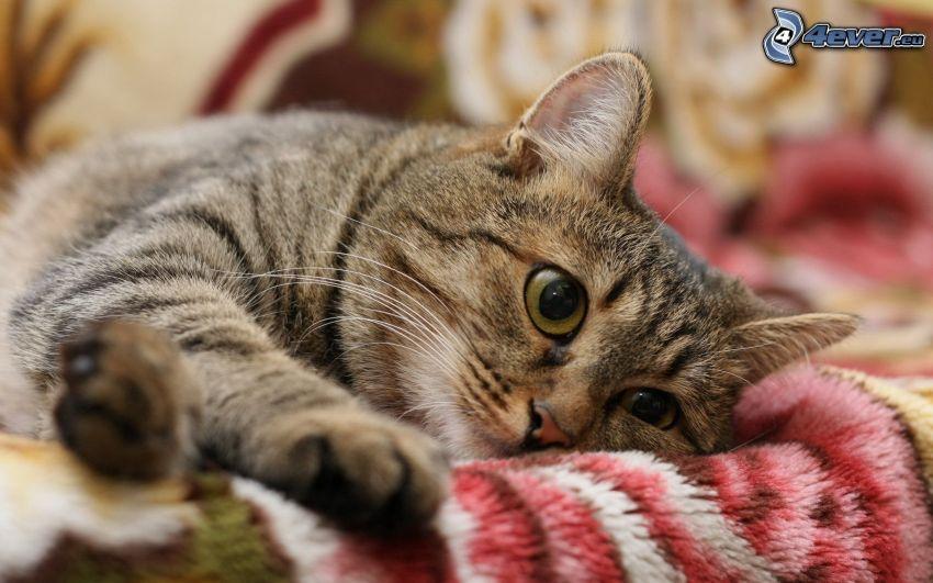 gato, descanso