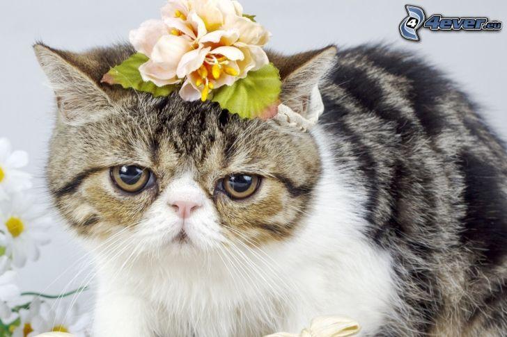 gato, flor