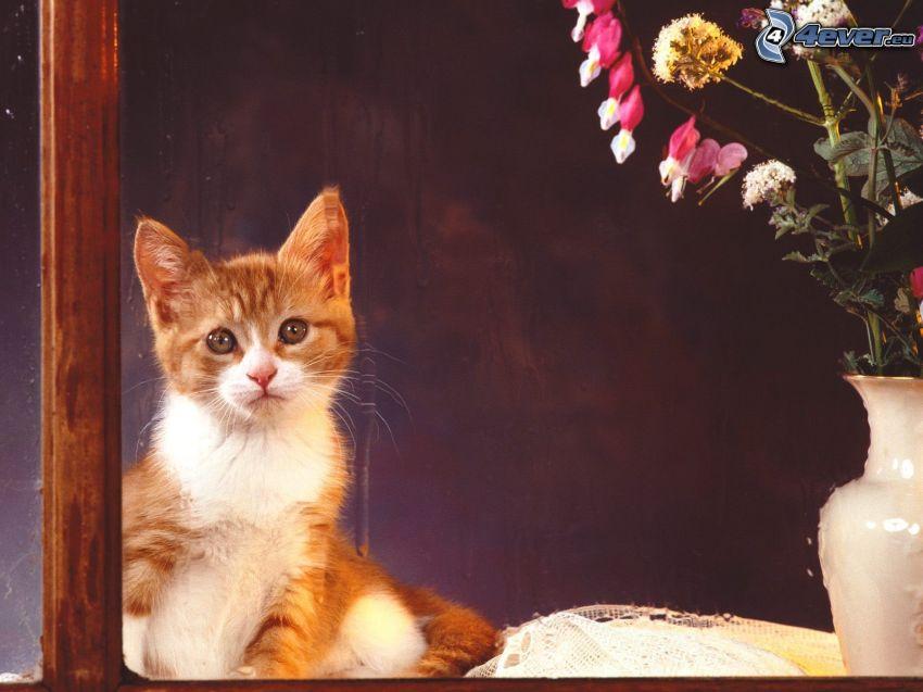 gato, florero, flores de campo